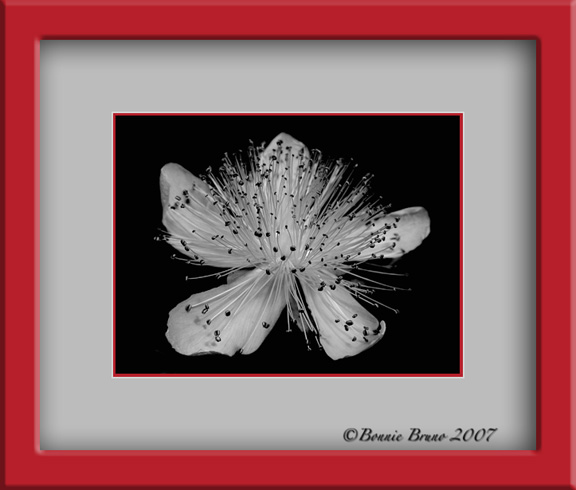 bw_wildflower-copy.jpg
