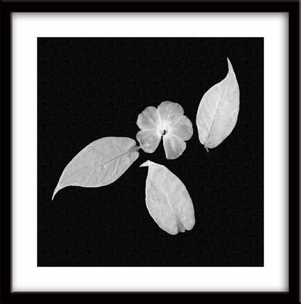 flowerbits_bw-copy.jpg