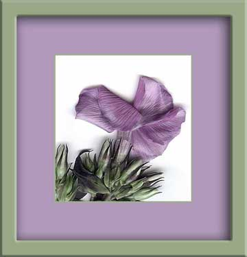 flowerpink2-copyb.jpg