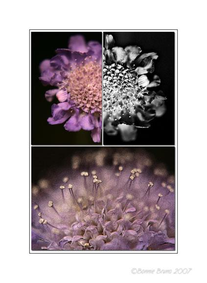 tripleflower.jpg