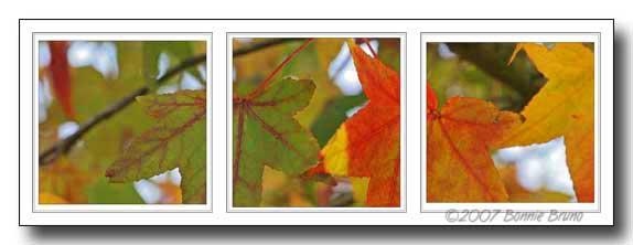autumntryp2.jpg