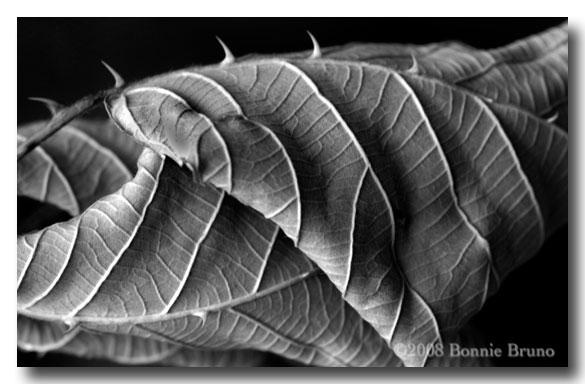 Black And White Image Photo Buffet