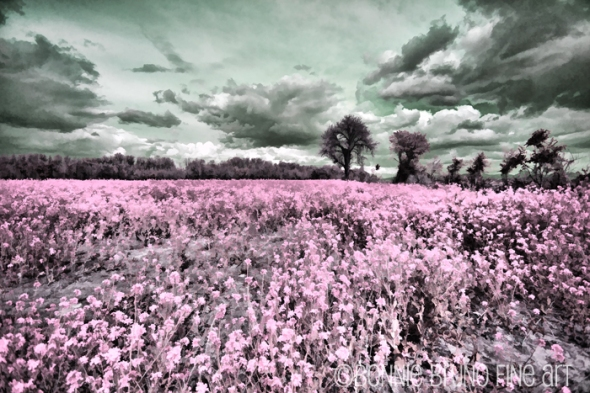 flowerfield-pink
