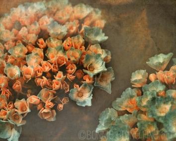 painterly-hydrangeas6708