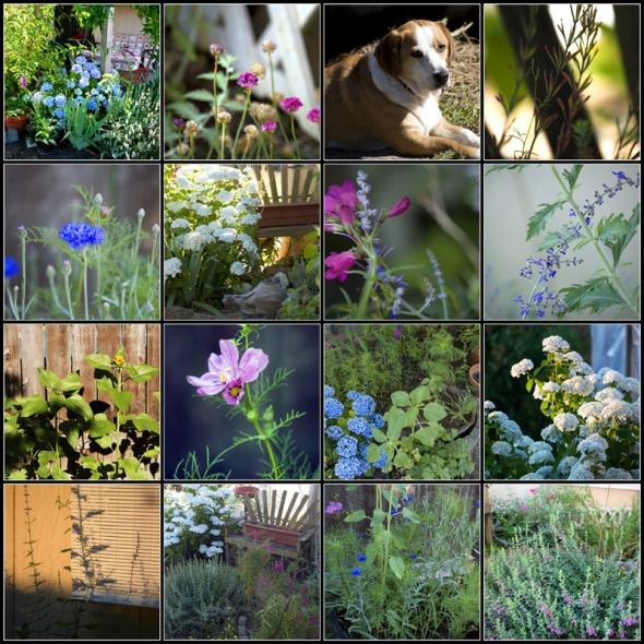 mosaic-backyard-july2013 copy