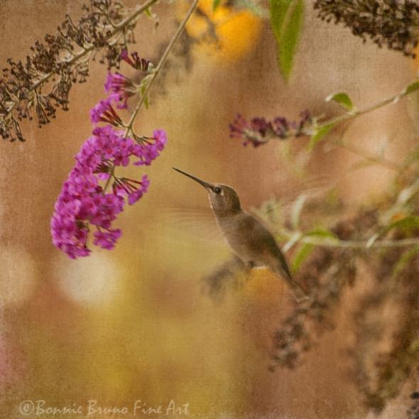 hummingbird_0706